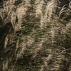 Grasses 2 by maxblack
