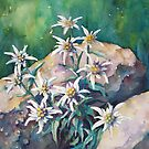 Edelweiss by Tania Richard