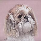 LuLu the Shihtzu by Charlotte Yealey