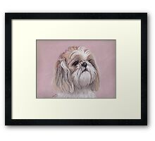 LuLu the Shihtzu Framed Print