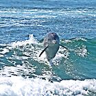 Dolphin at Play (2) by kalaryder