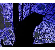Ice Cat Photographic Print