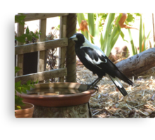 The Magpies know where to keep cool this Hot weather. 'Arilka' Canvas Print