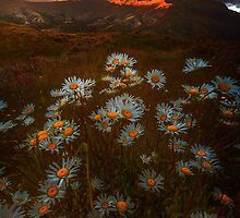 On Top Of The World by Rodney Trenchard
