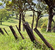 Crooked Fence by Jill Patterson