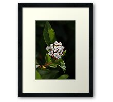 Tiny White Flowers Framed Print