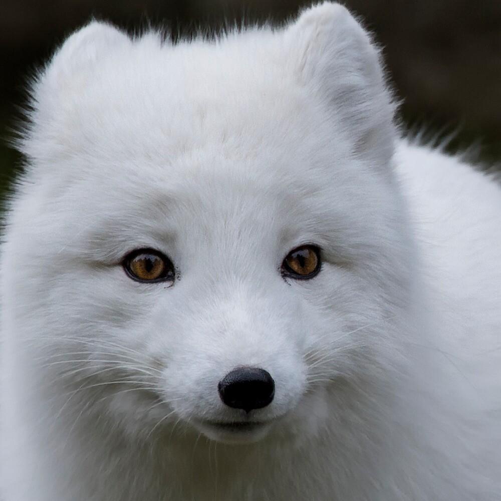 Foxy Lady by TeresaB