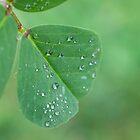 Raindrops on a tiny leaf by Mariola Szeliga