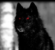 Red eyed Wolf by lycanthropeluna