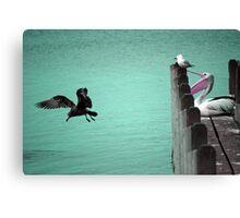 Pelican at Albany Yacht Club, Western Australia Canvas Print