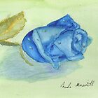 Blue Rose by PamelaMeredith
