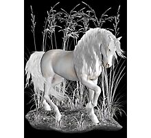 Ivory .. a white stallion Photographic Print