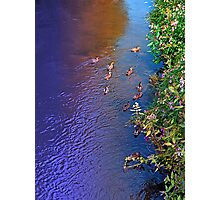 Ducks on patrol | waterscape photography Photographic Print