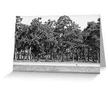 Southern Trees-South Carolina Greeting Card