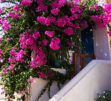 Bougainvillea in a Nimborio Lane by Tom Gomez