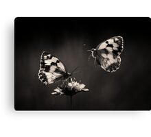 Marbled Whites Canvas Print