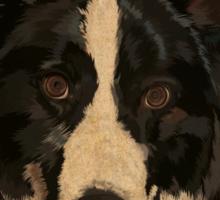 Jasper - border collie Sticker