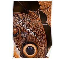 Owl Butterfly Macro Poster