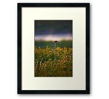 """""""Thistle"""" Framed Print"""