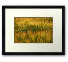 """Barley"" Framed Print"