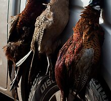 Three Birds by Country  Pursuits