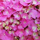 Hydrangea Up Close by Ron Hannah
