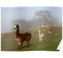 Alpacas on Guard Poster