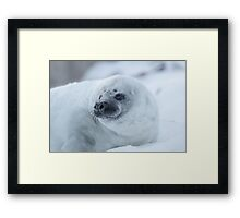 Portrait of a Grey Seal Pup Framed Print
