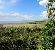 Looking North  from  Lake Eyasi towards Ngorongoro  - Tanzania by john  Lenagan