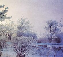 Frost Covered Morning by Dorothy  Pinder