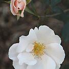Floral Dream in February by heatherfriedman
