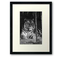 The Jungle's Ruler Framed Print