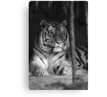 The Jungle's Ruler Canvas Print