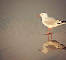 Reflections.... by Jenny Dean
