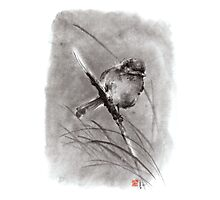 Bird on the branch litlle sparrow winter cold rain painting ink Photographic Print