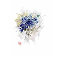 Cornflower Cornflowers Blue Yellow Green watercolor painting Photographic Print