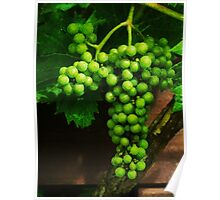The Grape Vine  Poster