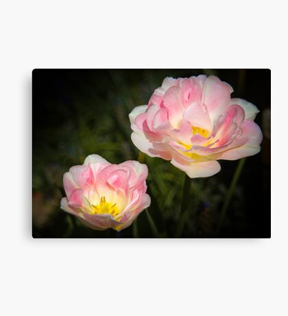Pink and white flowers  Canvas Print
