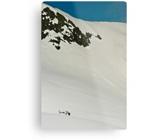 The Fox and Franz Joseph Glaciers Metal Print