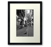 Night Cat Framed Print
