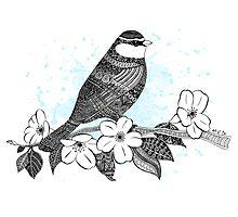 Bird on cherry blossoms Photographic Print