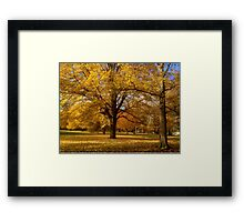 Yellow Trees Framed Print