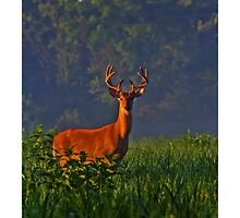 2013 Aug Whitetail Buck in Velvet No 7 by Rick  Grisolano Photography LLC