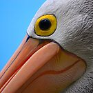Pelican Close-up by Bami
