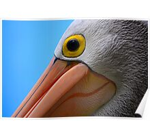 Pelican Close-up Poster