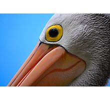 Pelican Close-up Photographic Print