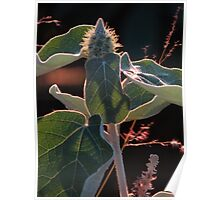 plant against the sun - planta contraluz Poster