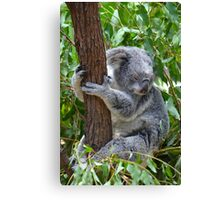 Sleepy Koala Canvas Print