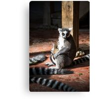 Monkey mother with baby Canvas Print