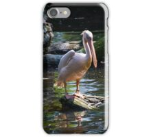 Pelican Sitting at the water place iPhone Case/Skin